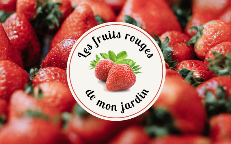 logo fruits rouges de mon jardin